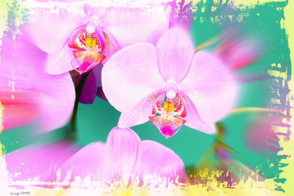 Greg Stott, Victoria's Orchid, 2004, Digital Photography & Illustration, 19  x 13 inches