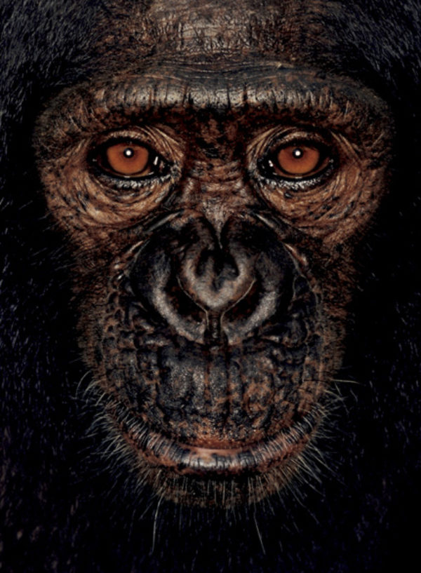 © James Mollison, courtesy Chris Boot, James, 2001, from James and Other Apes