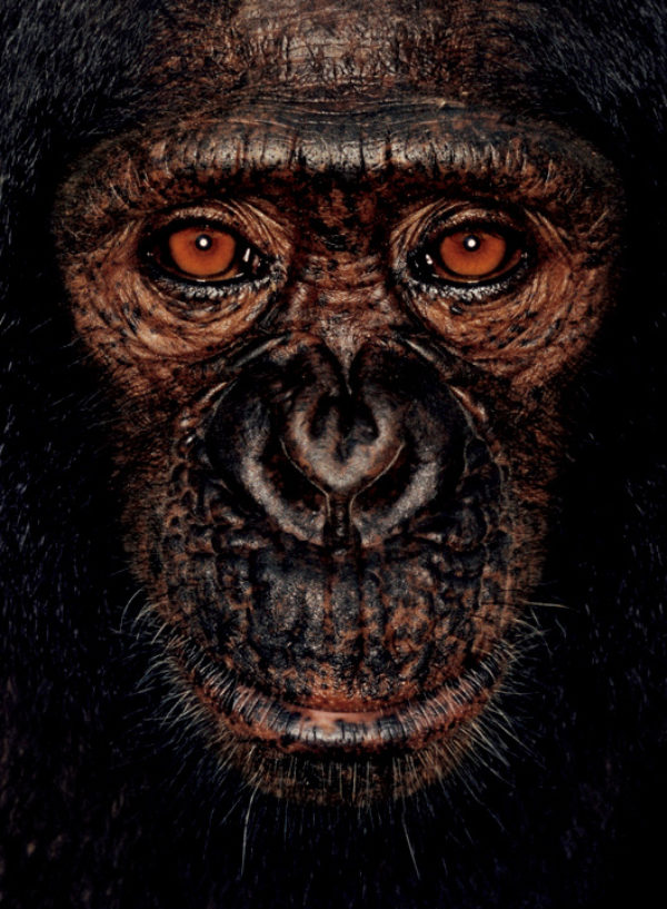 ©James Mollison, courtesy of Chris Boot, James from James and the Other Apes, 2001