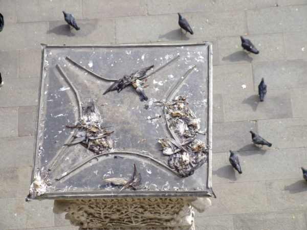 Andrew Sims, Death from Above , 2008