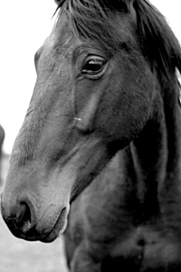 Stephanie Palmer, The Lonely Horse, Black and White Photograph